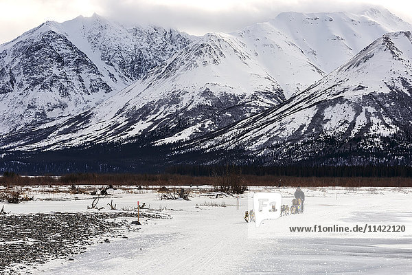 Melissa Owens-Stewart on the trail on the South Fork of the Kuskokwim River after leaving the Rohn checkpoint during Iditarod 2016  Alaska.
