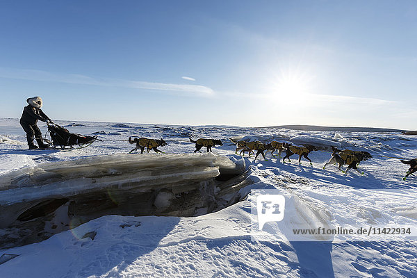 Brent Sass crosses jumbled sea ice and pressure ridges of Norton Bay as he approaches the Koyuk checkpoint  during the 2016 Iditarod  Alaska