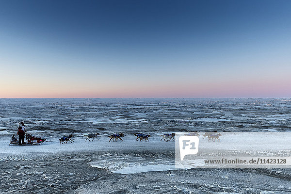 Aliy Zirkle runs on the trail along the shore of the Bering Sea just a few miles before the finish in Nome for a third place finish during the 2016 Iditarod  Alaska