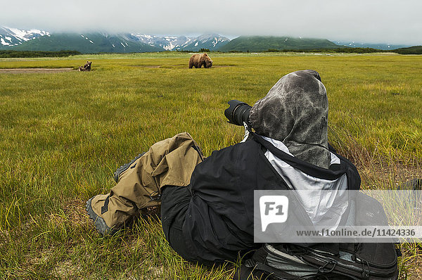 Photographer photographing coastal Brown Bears foraging on grasses  Katmai National Park  Southwest Alaska  USA