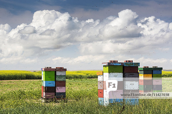'Colourful stacked bee hive boxes in a field with clouds above  North of Rolling Hills; Alberta  Canada '