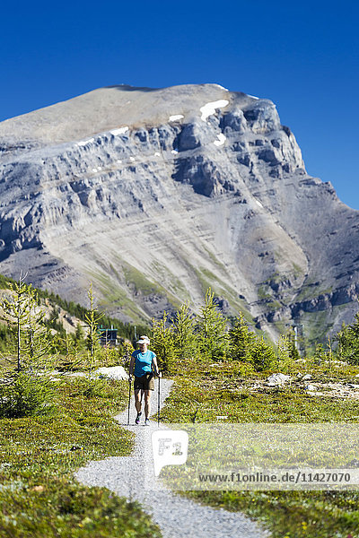 'Female hiker walking along a meadow trail with mountain peak in the distance and blue sky; Banff  Alberta  Canada'