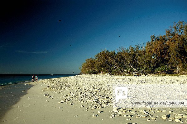 Lady Elliott Island coral beach  Great Barrier Reef  Queensland  Australia. (Photo by: Auscape/UIG)
