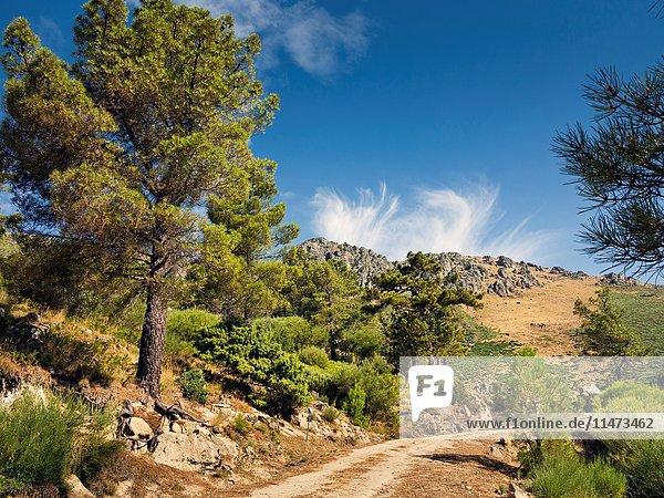 Peluca cliff in the Sierra de Gredos from The Horcajo. Mijares. Avila. Castilla Leon. Spain. Europe.