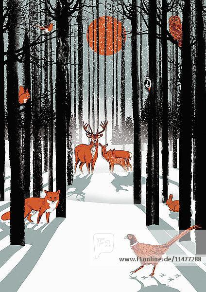 Gruppe von Tieren im winterlichen Wald