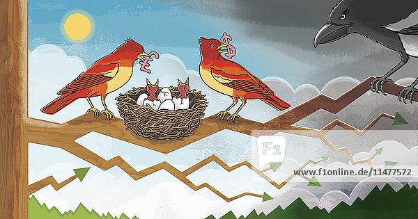 Vögel füttern ihre Küken mit Geld und verteidigen ihr Nest gegen Angreifer