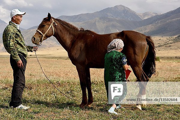 Husband holding mare while wife milks the horse in Aksu-Zhabagly Nature Reserve Kazakhstan.