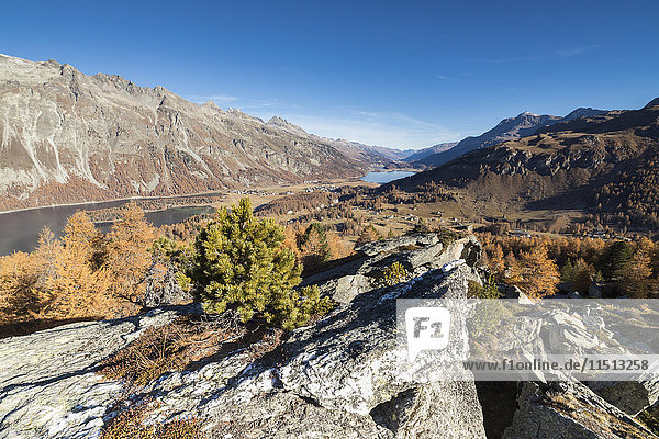 Colorful trees and blue sky frame Lake St. Moritz in the fall  Val Fedoz  Canton of Graubunden  Engadine  Switzerland  Europe