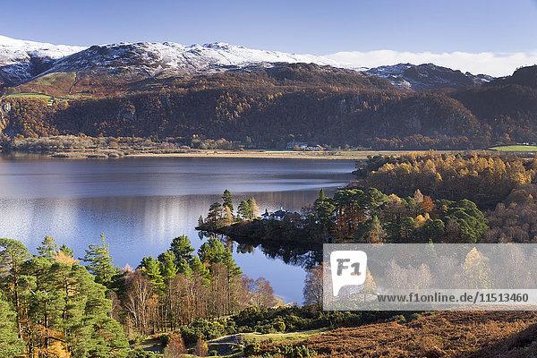 Woodland around Brandlehow  Derwent Water  Cumbria  England  United Kingdom  Europe