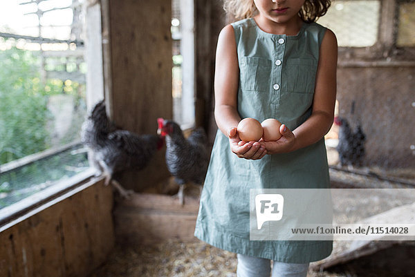 Girl in chicken coop  holding fresh eggs  mid section