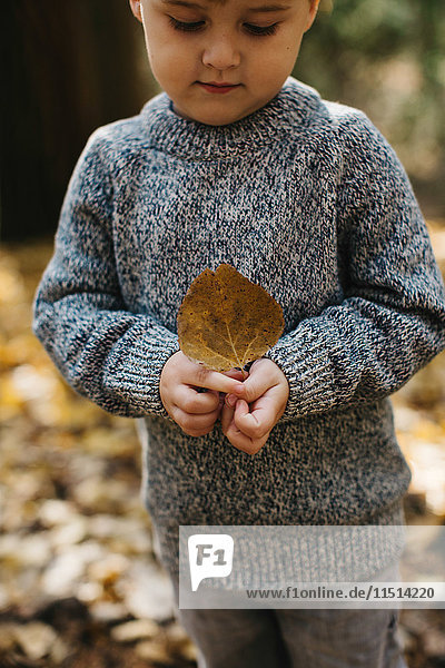 Boy holding brown leaf in forest