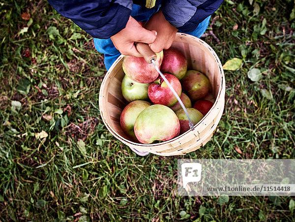 Hüftunteransicht eines Jungen  der einen Eimer mit frisch gepflückten Äpfeln trägt Hüftunteransicht eines Jungen, der einen Eimer mit frisch gepflückten Äpfeln trägt