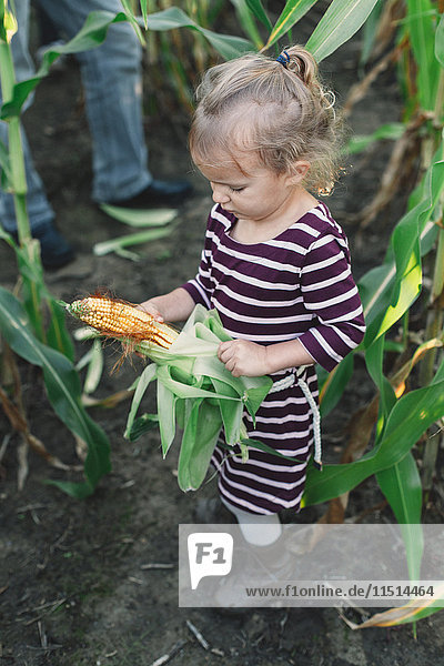 Mädchen im Maisfeld beim Auspacken der Blätter des Maiskolbens