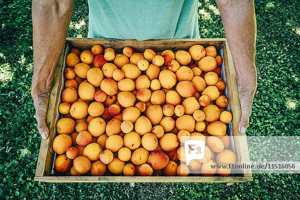 Caucasian man holding box of peaches