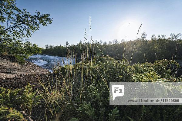 Foliage near remote river