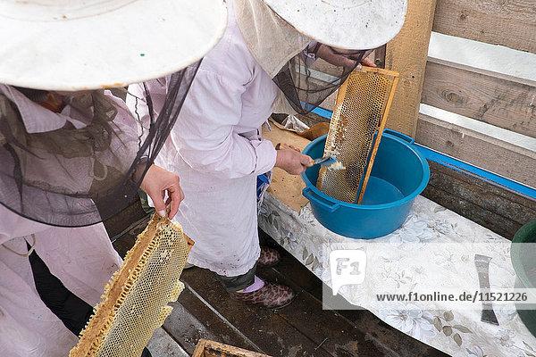 Zwei Imkerinnen kratzen im Unterstand Honig von den Waben