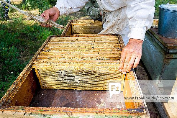 Mittelteil eines männlichen Imkers  der Bienenstock und Waben mit Federn pflegt