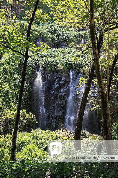 Regenwald-Wasserfall  der über eine Felswand fließt  Insel Réunion