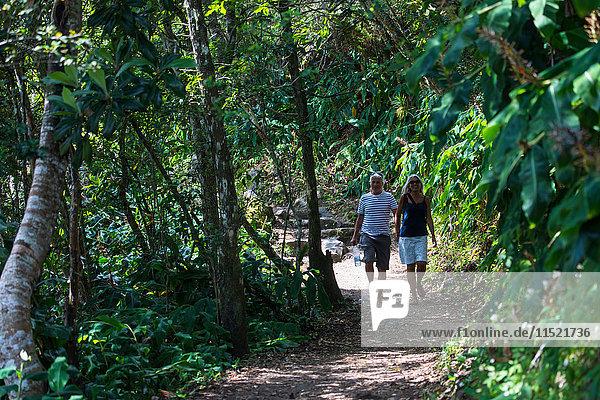 Paar beim Spaziergang auf einem Tropenwaldweg  Insel Réunion