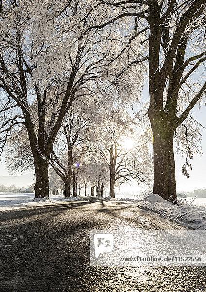 Baumgesäumte Straße im Winter Baumgesäumte Straße im Winter