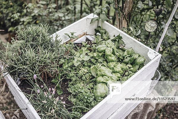 Kräutersortiment in einer Box im Garten
