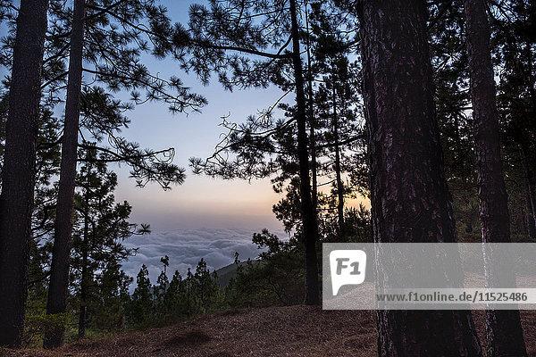 Spanien  Teneriffa  Naturschutzgebiet Las Lagunetas im Teide-Nationalpark