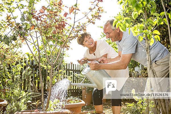 Glückliches Seniorenpaar in der Gartenbewässerung zusammen