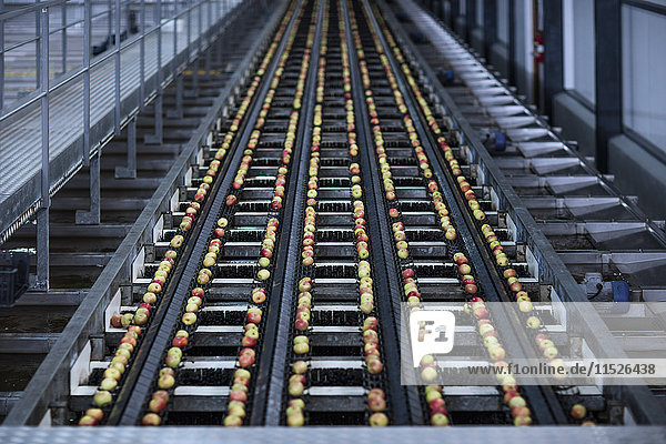 Äpfel in der Fabrik auf Förderband Äpfel in der Fabrik auf Förderband