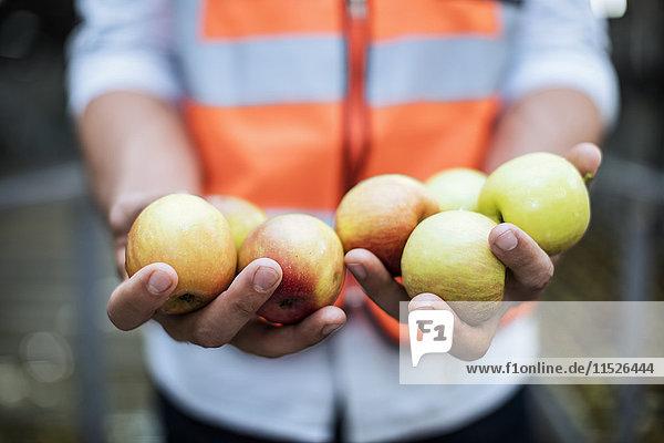 Mann mit Sicherheitsweste mit frischen Äpfeln Mann mit Sicherheitsweste mit frischen Äpfeln