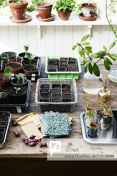 Pots with seedlings