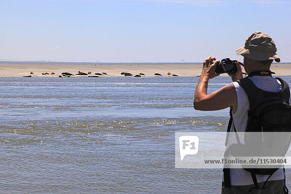 France  Northern France  North Coast. Berck sur Mer. Observing a group of seals on shoal in Authie Bay