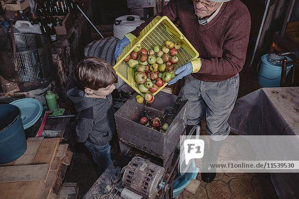 Little boy watching senior man turning basket of apples into a crusher