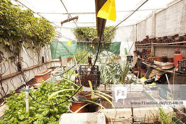 Gewächshaus mit Bewässerungssystem