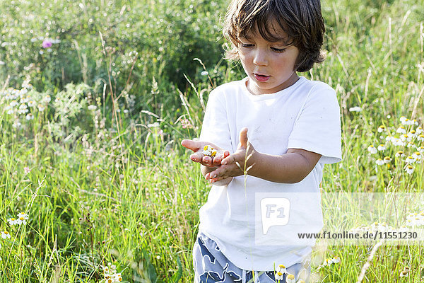 Portrait of little boy standing on a meadow with handful of daisies