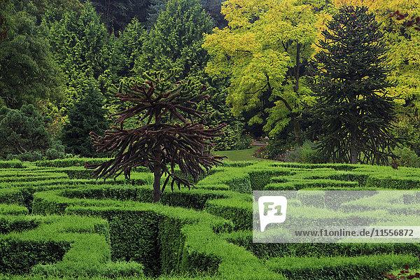 Maze  VanDusen Gardens  Vancouver  British Columbia  Canada  North America