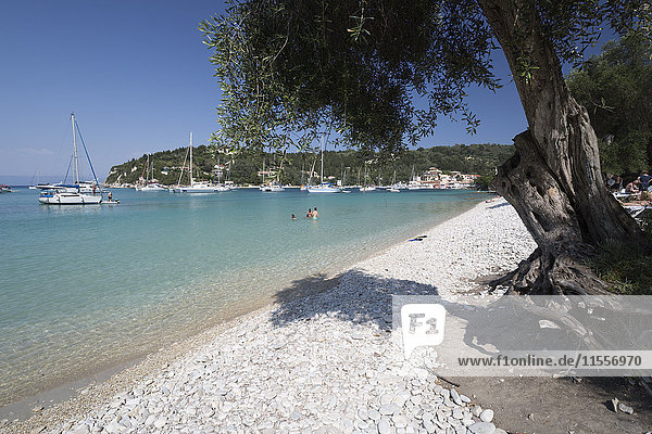 Pebble beach and bay with olive tree  Lakka  Paxos  Ionian Islands  Greek Islands  Greece  Europe