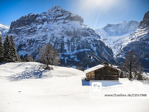 Schweiz  Kanton Bern  Grindelwald  Winterlandschaft mit Skihütte und Mittelhorn