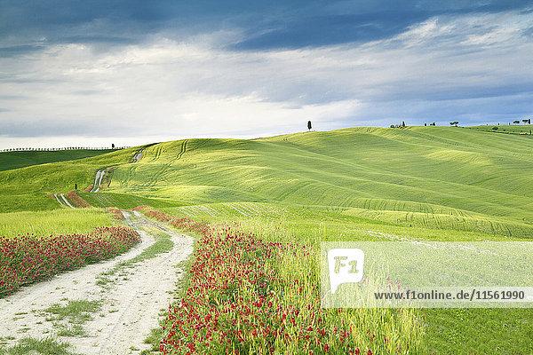 Italien  hügelige Landschaft