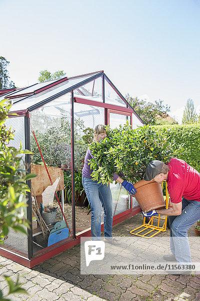 Schweden  Skane  Frau und Mann mit großer Topfpflanze