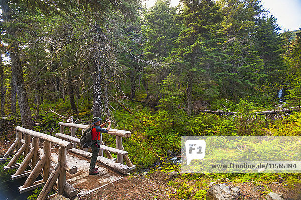 'A man hiking across a log bridge on the Turnagain Pass Trail in the Chugach National Forest  South-central Alaska on a summer day; Alaska  United States of America'