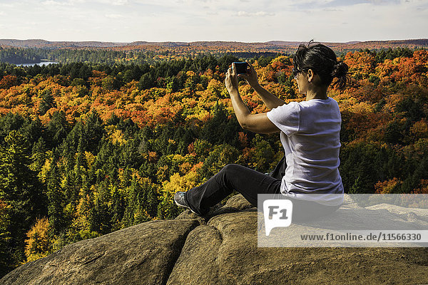 'Woman using a smart phone to take pictures of the autumn colours in Algonquin Park; Ontario  Canada'