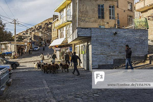 'Shepherd with a flock of sheep; Kandovan  East Azarbaijan  Iran'