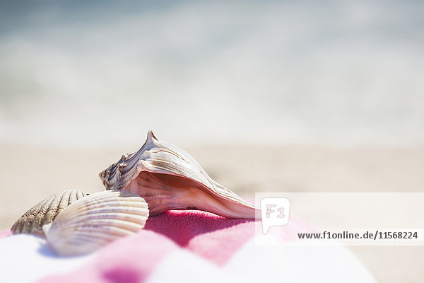 Close up of sea shells and beach towel on beach