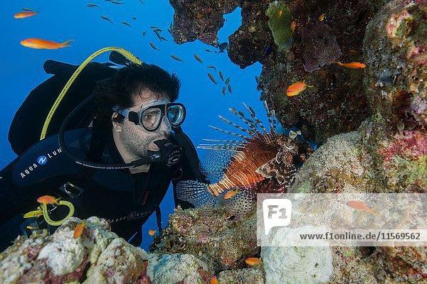 Taucher betrachtet pazifischen Rotfeuerfisch (Pterois volitans)  Rotes Meer  Dahab  Sinai-Halbinsel  Ägypten  Afrika