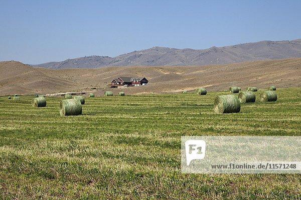 Runde Heu Ballen auf gemähten Wiese  Provinz Montana  USA  Nordamerika