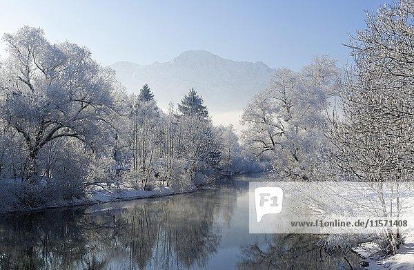 Bäume mit Raureif am Ufer  Loisach  bei Kochel am See  Loisachtal  Oberbayern  Bayern  Deutschland  Europa