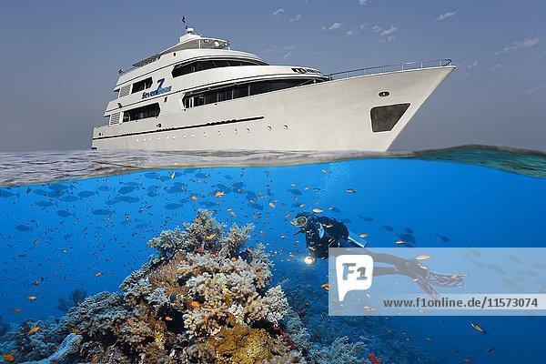 Oben: Tauchsafarischiff  Taucherschiff  Seven7Seas  unten Taucher  Korallenriff  Fischschwarm  Rotes Meer  Ägypten  Afrika