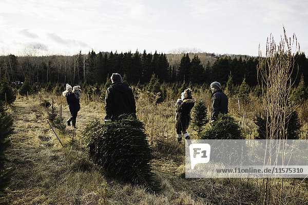 Parents and baby girls in Christmas tree farm  Cobourg  Ontario  Canada
