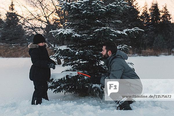 Vater und Tochter wählen ihren eigenen Weihnachtsbaum