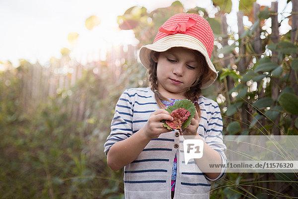 Girl investigating leaves  Blowing Rocks Preserve  Jupiter  Florida  USA